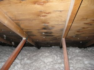 attic insulation and signs of mold found during inspection